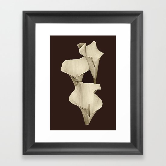 Cream Calla Lilly. Framed Art Print