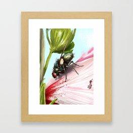 Fly on a flower 15 Framed Art Print
