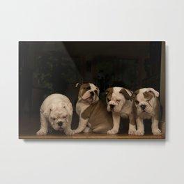 Four Bulldog Puppies Metal Print