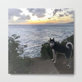 Wolfie the Siberian Husky No.2 Metal Print