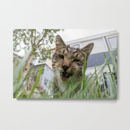 Cat eating grass Metal Print