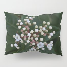 Viburnum tinus buds and flowers Pillow Sham