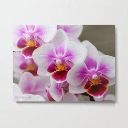 Phalaenopsis Orchid named Be Tris Metal Print