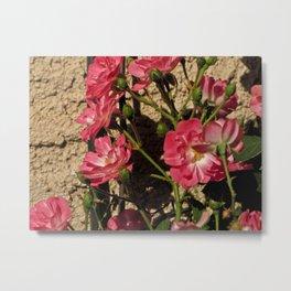 Light Pink Metal Print