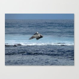 Flying pelican above the ocean Canvas Print