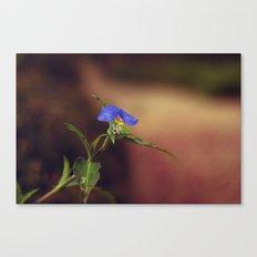 Little Beauty Canvas Print