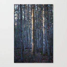 the light tree Canvas Print