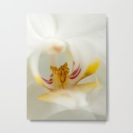 Looking into the Orchid Metal Print