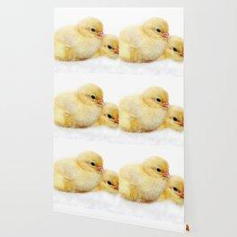 Chicks Wallpaper