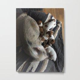 Pig and Puppies Metal Print