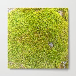 Moss, Nature Trails for Life Metal Print