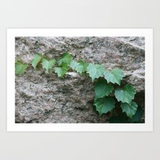 Granite Ivy Art Print