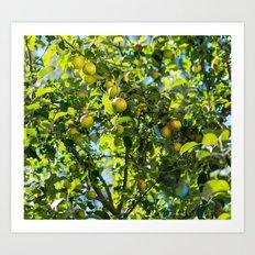 Swedish apples Art Print