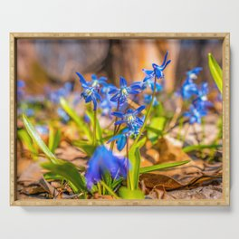 Blue flowers of Scilla primroses Serving Tray