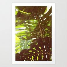 Let Light In Art Print