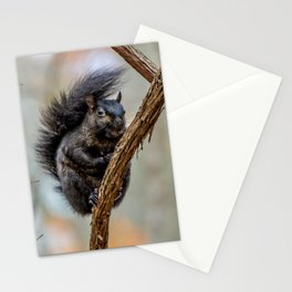 Black Squirrel Stationery Cards