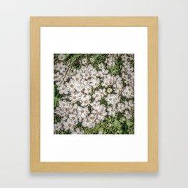 JC FloralArt 01 Framed Art Print