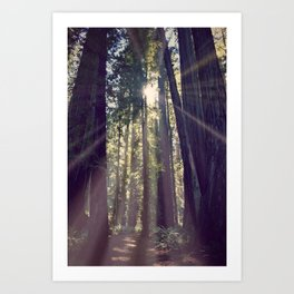 Redwoods Hike Art Print