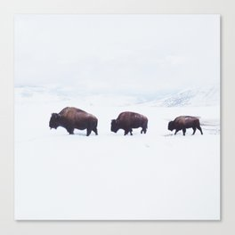 Buffalo Walking Through Snow in Winter Canvas Print