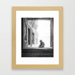 Sitting Monkey Framed Art Print