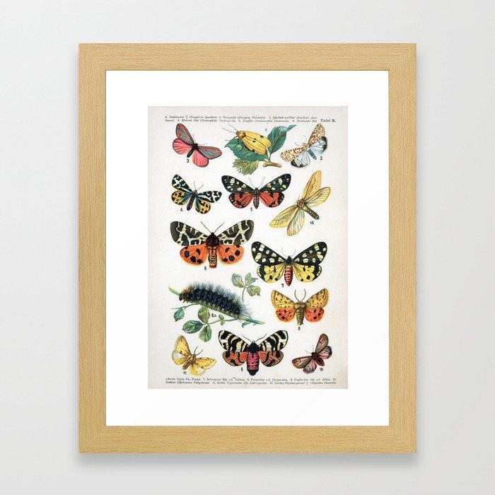 Butterfly Chart Vintage Framed Art Print