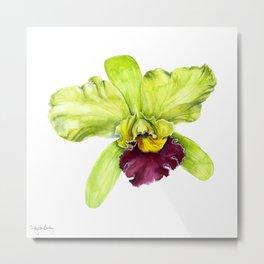 Magenta & Green Cattleya Orchid Metal Print