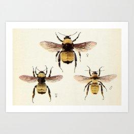 Three Bees Art Print