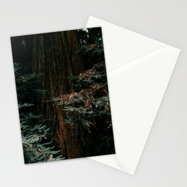 Muir Woods Redwood Stationery Cards