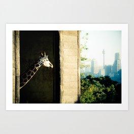 Giraffe (Taronga Zoo Sydney) - The View From My Room Art Print