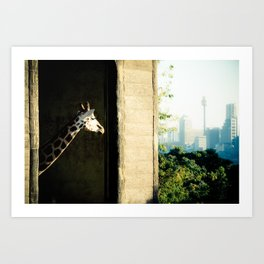 Giraffe (Taronga Zoo Sydney) - The View From My Room Art Print