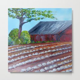 Rows of Cotton Metal Print