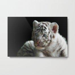 White Tiger Cub Metal Print