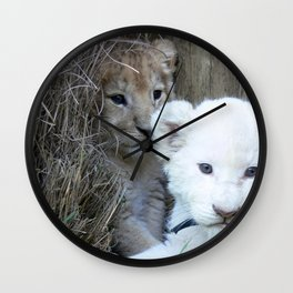 White and Gold Baby Lion Cubs! Wall Clock