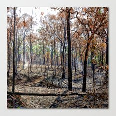 Fire damaged forest Canvas Print