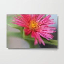 Color explotion Metal Print