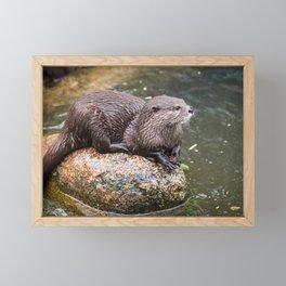 Zwergotter Framed Mini Art Print