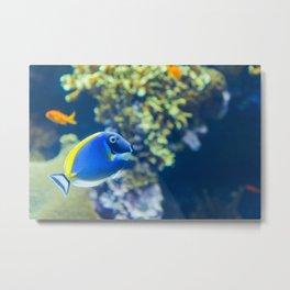 The blue fish Dory Metal Print
