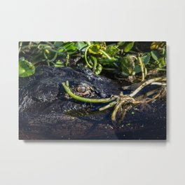 Alligator Metal Print