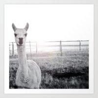 llama Art Prints featuring Llama by PoseManikin