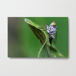 flied on the green leave Metal Print