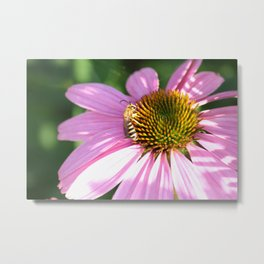 The wasp on the flower Metal Print