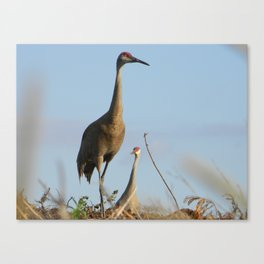 Cranes on the Lookout Canvas Print