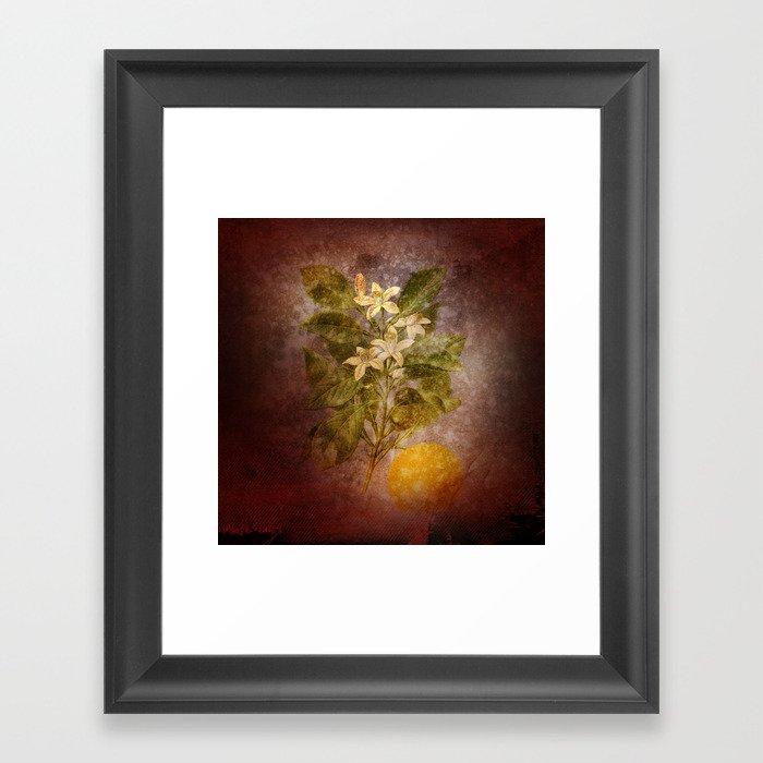 Vintage Fruit Framed Art Print