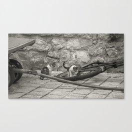 Cats Kotor Canvas Print