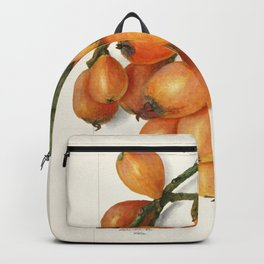 Loquats (Eriobotrya Japonica) (1908) by Amanda Almira Newton Backpack