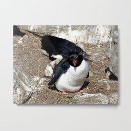 Rockhopper Penguin Sitting on Egg Metal Print
