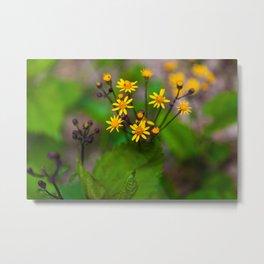Wildflowers In Shenandoah National Park Metal Print
