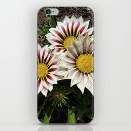Zany Gazania - red and white stripes iPhone Skin