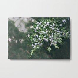 Berryful Pine Metal Print