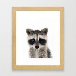 Baby Racoon Framed Art Print
